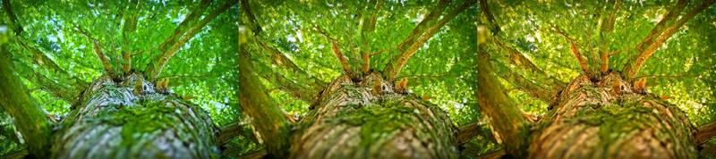 ホワイトバランスの違いによる木の印象