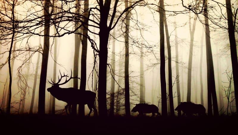 森の中に立つしかとイノシシのシルエット写真