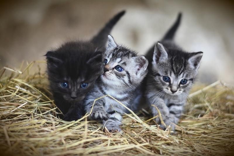 藁の上にいる3匹の子猫
