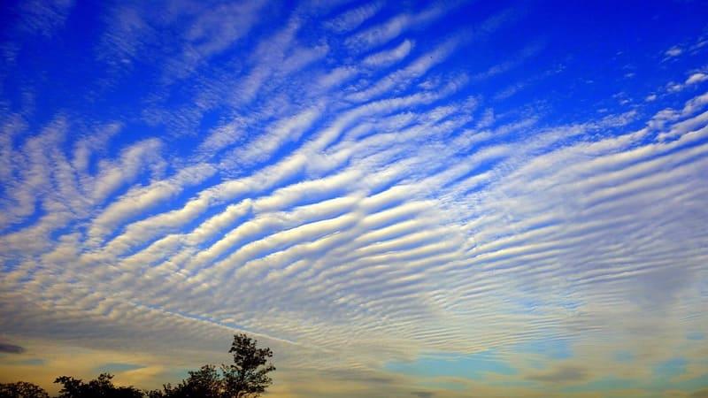 青い空に広がっている波状雲の写真
