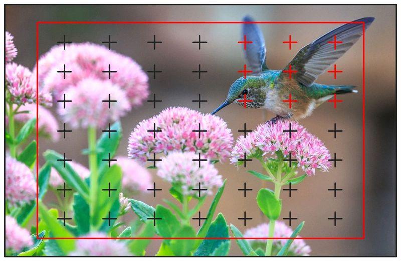 花によってきた鳥の3D、ダイナミックフォーカス設定で撮られたイメージ図