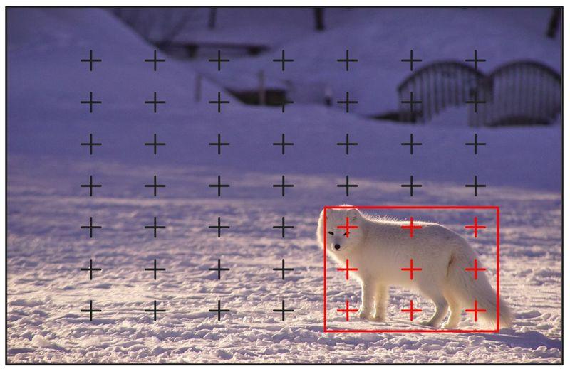 雪の広がる銀世界にいる一匹の子犬をワイドで撮ったイメージ図