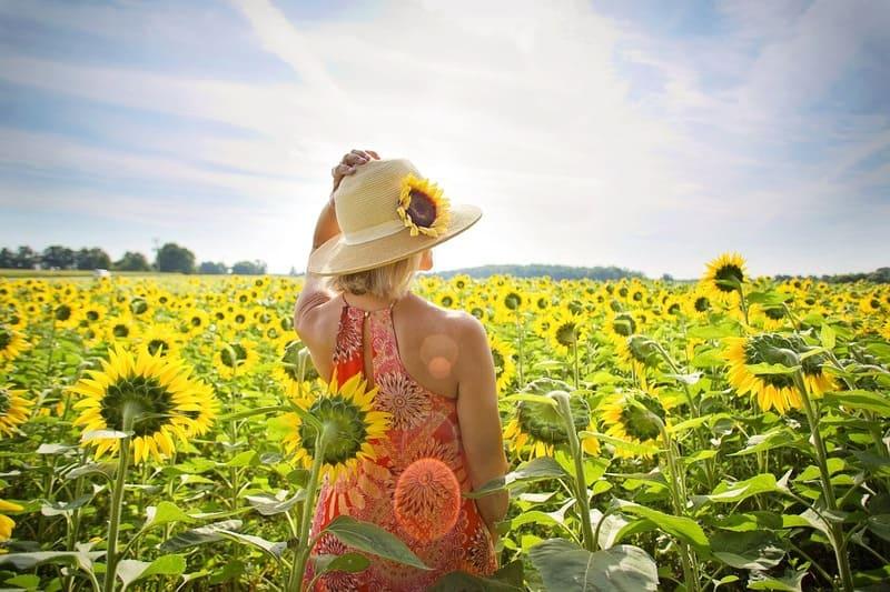 夏のひまわり畑の中に立つ麦わら帽子にワンピース姿の女性