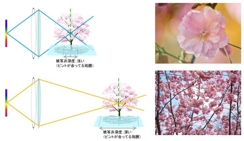 被写界深度と距離の関係イメージ図