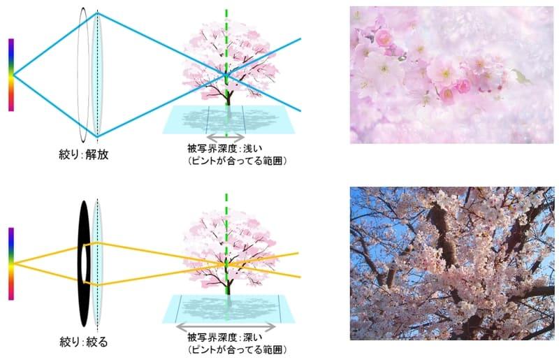 被写界深度と絞りの関係イメージ図