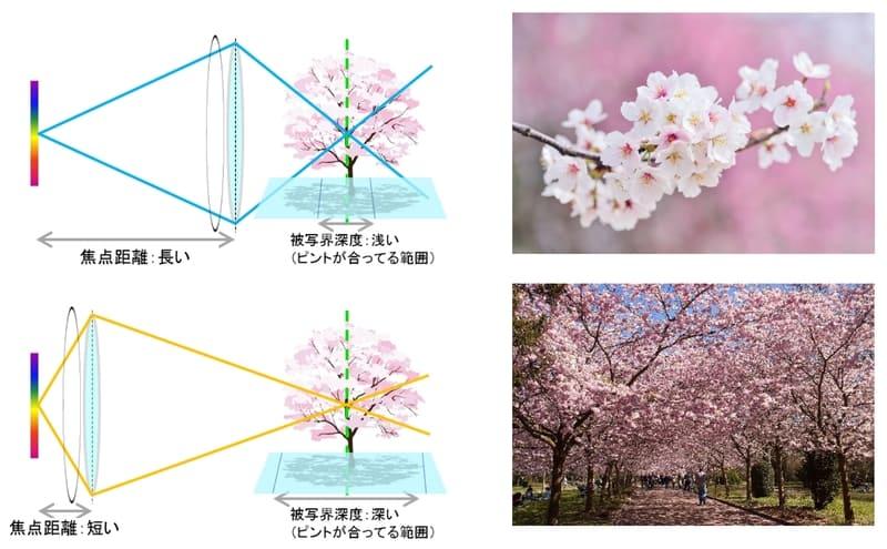 被写界信徒と焦点距離の関係イメージ図