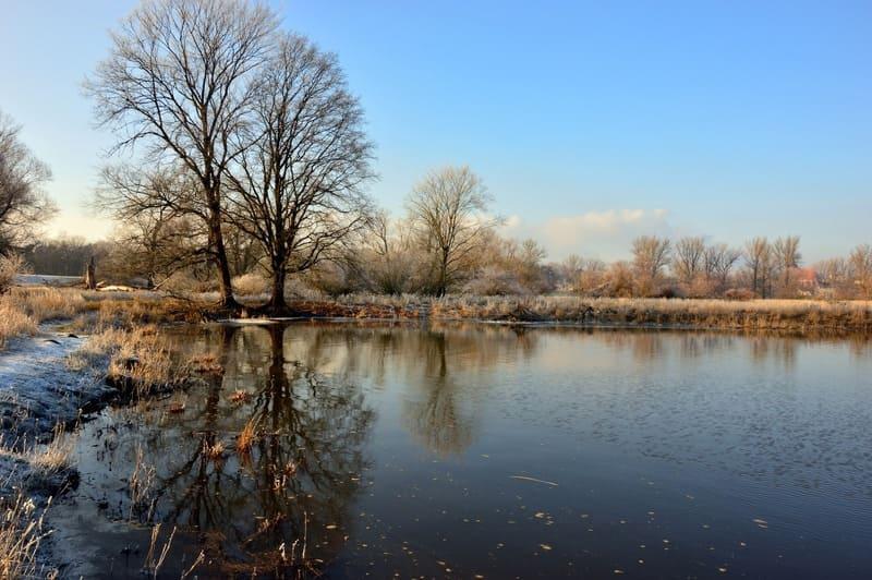 湖畔に写る青空と葉のない木々の冬の景色