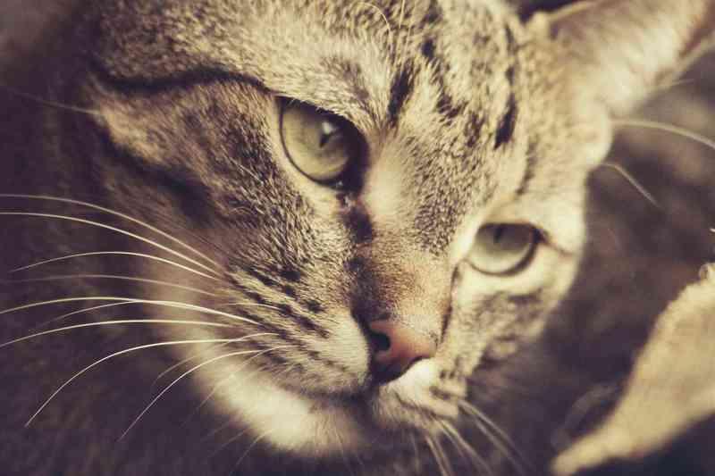 ニュートラルで撮られた猫の顔アップ写真