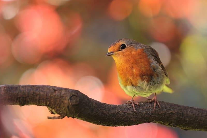 望遠レンズで撮影された枝の上にとまった色鮮やかな鳥の写真
