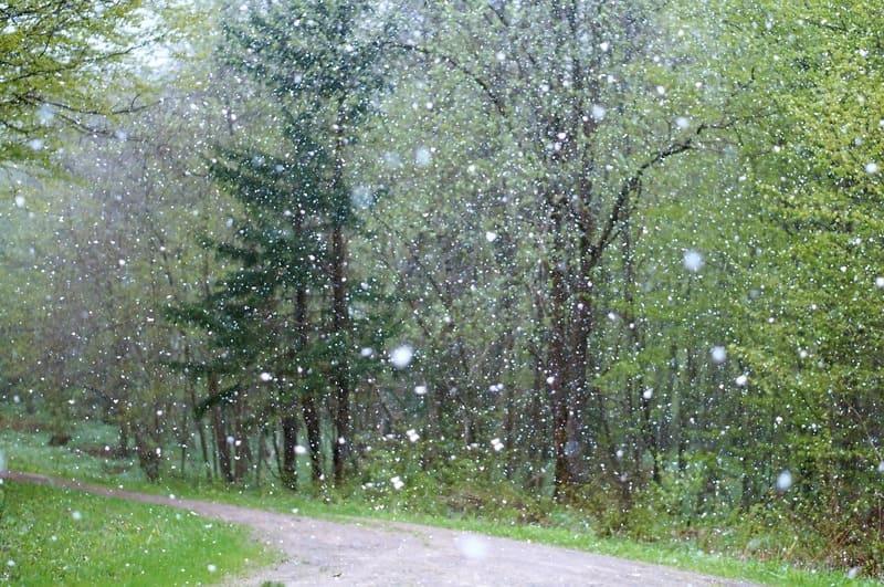 森林の中で撮られた降雪をキレイに写した写真