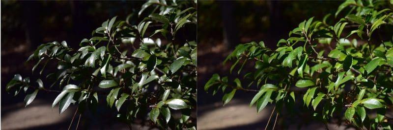 草をPLフィルターで鮮やかにした比較写真