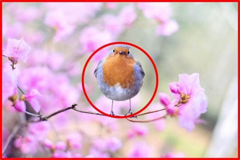日の丸構図で撮られた鳥の写真