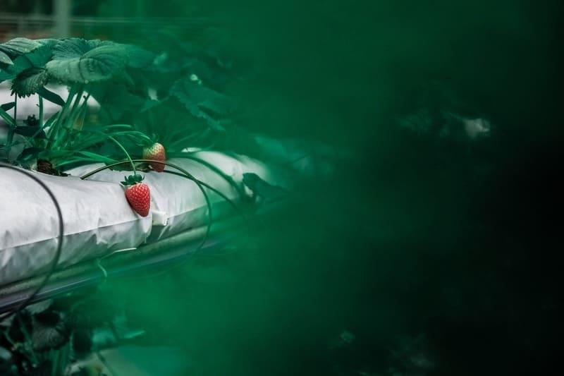 前ボケのあるイチゴの写真