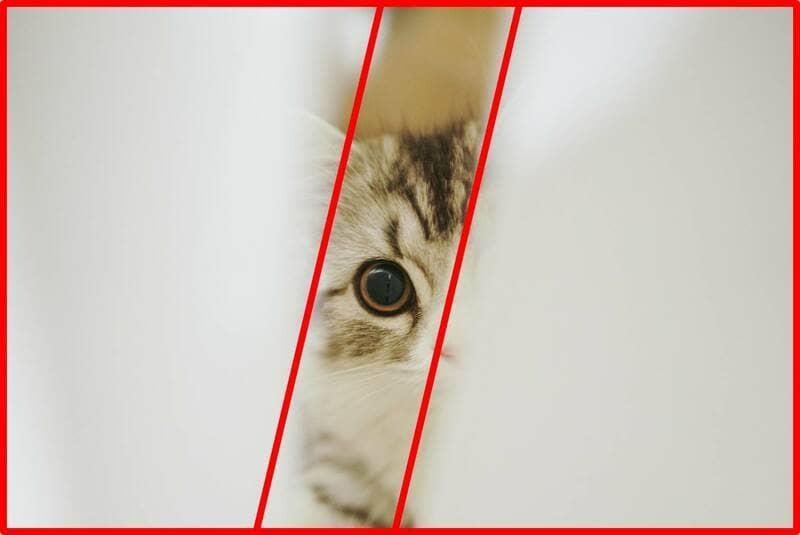 布のすきまに現れた子猫の写真