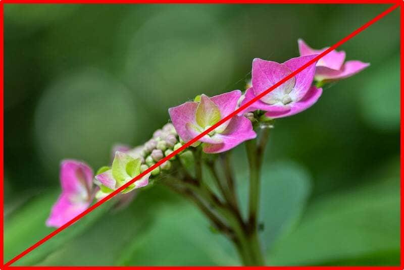 対角線構図を意識した花の写真