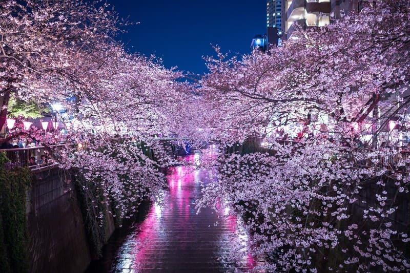 目黒川の橋の上から撮った桜