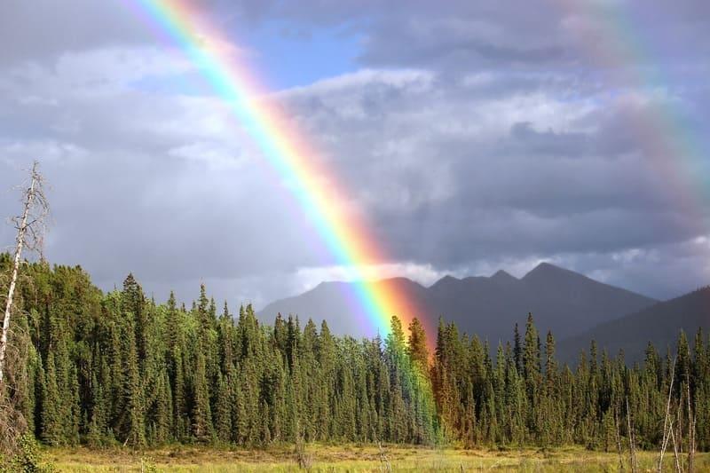 森の上に出た濃い虹