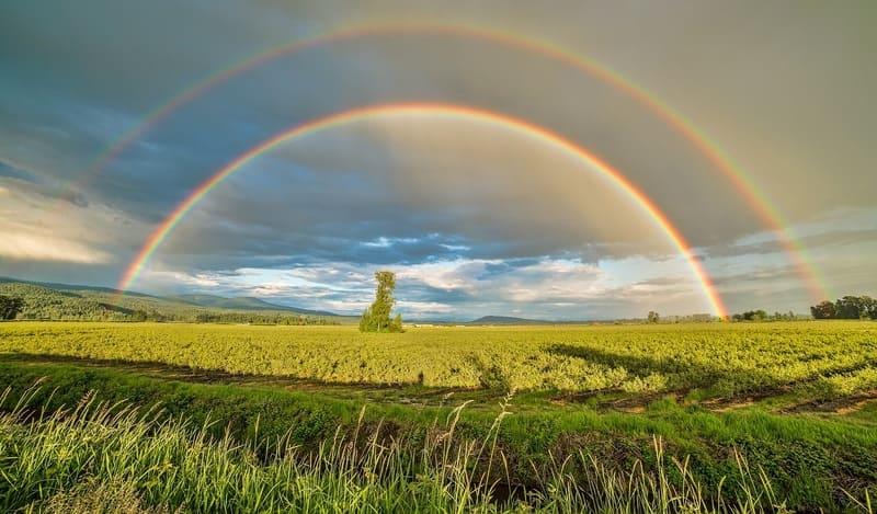 主虹と副虹がはっきりと出た草原の写真