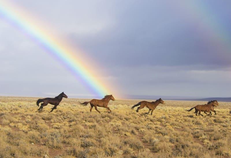 草原をかける馬と虹の写真