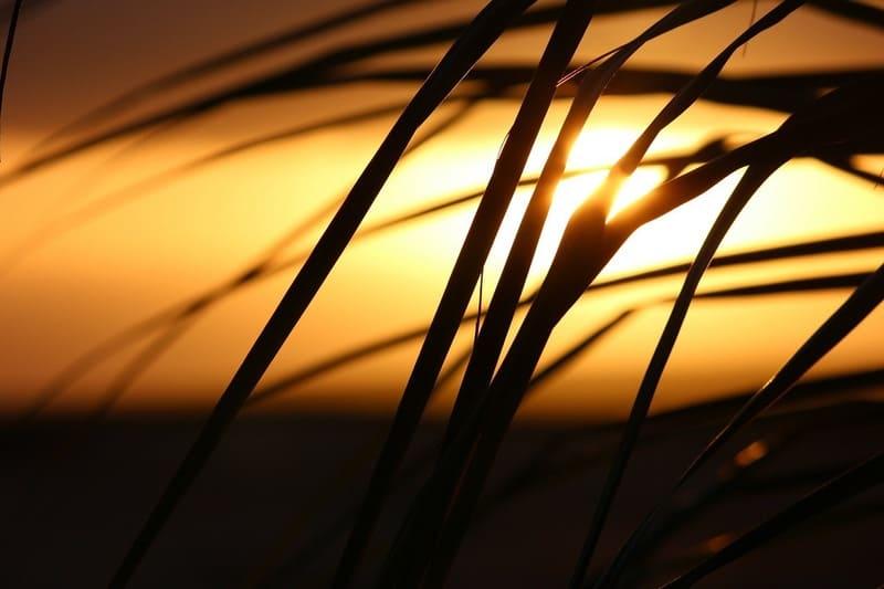 夕焼けと稲穂のシルエット写真