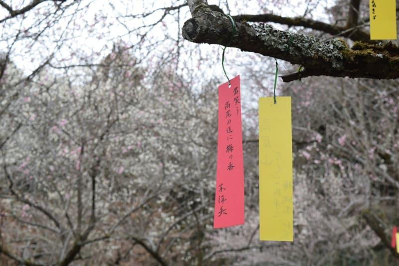 天神梅林の短冊と梅の写真