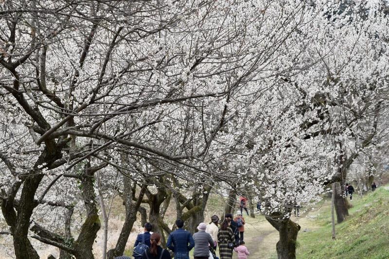遊歩道梅林の写真