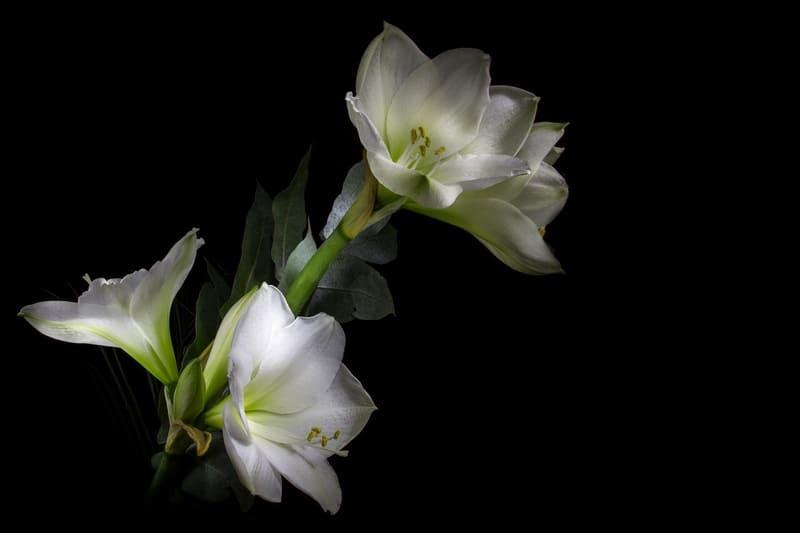コントラストの強調された花の写真