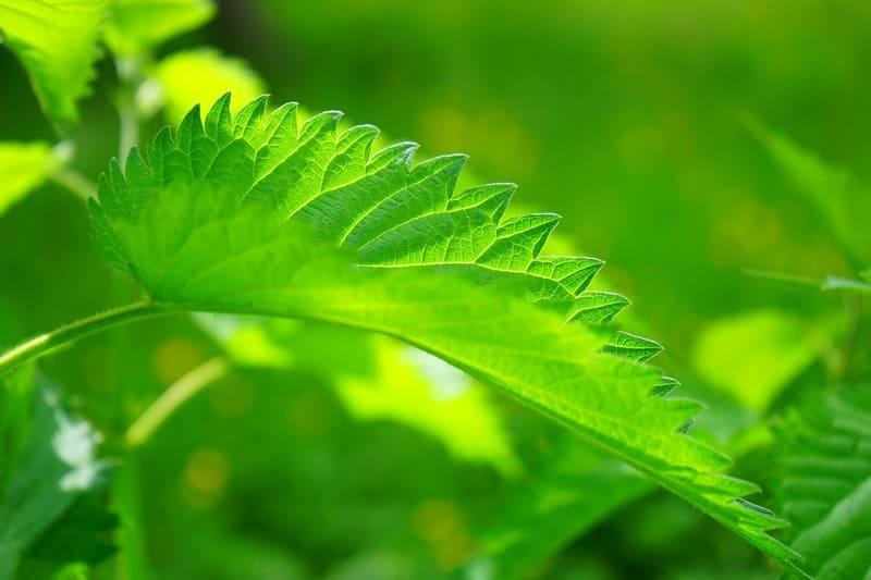 キレイな新緑の葉