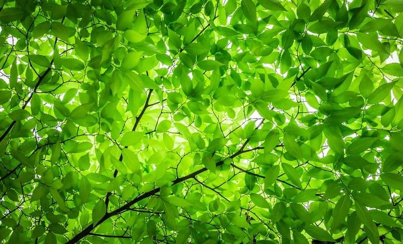 キレイな緑の木々の葉