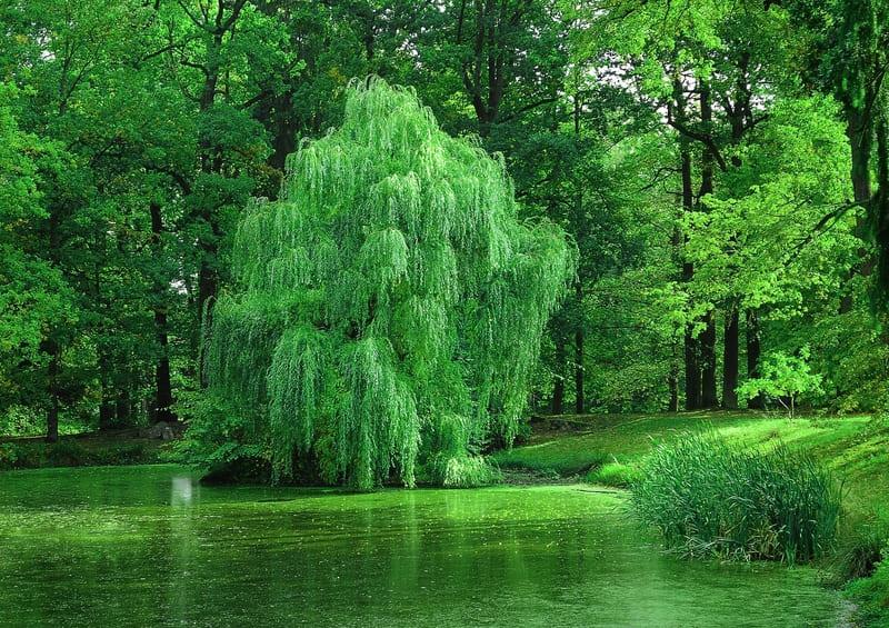 緑が鮮やかできれいな森の中の写真