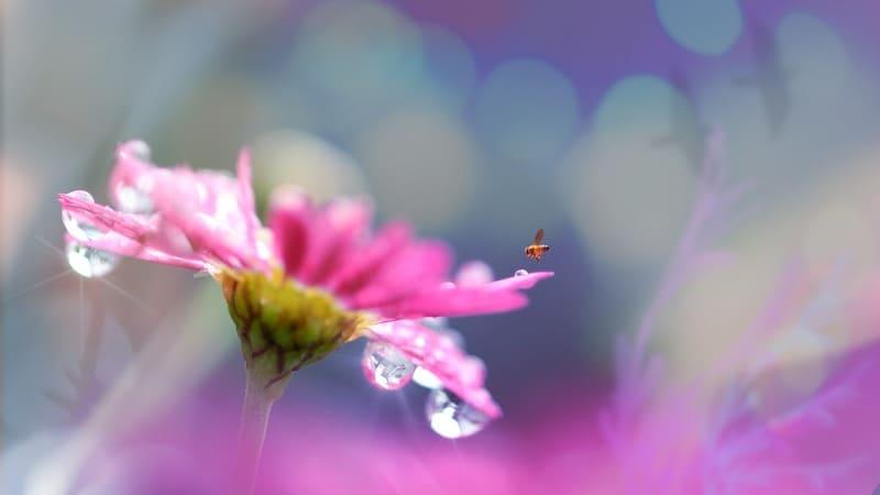 マクロ撮影で撮ったボケのある花の写真