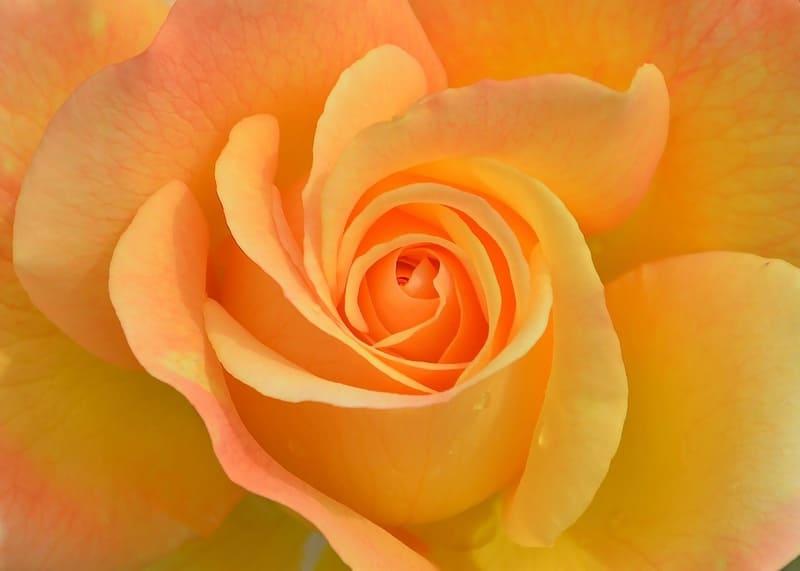 マクロ撮影した花の写真