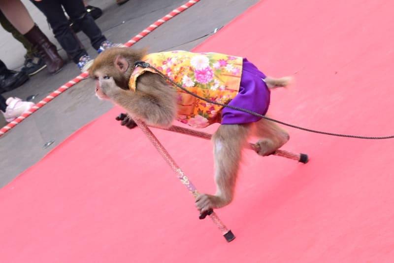 猿回しの竹馬に乗った猿