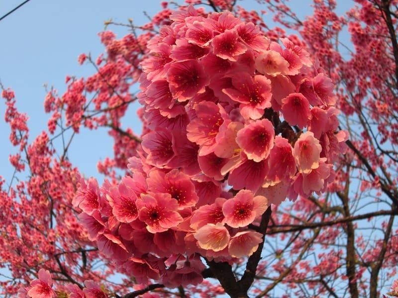 湾曲が起きている花の写真
