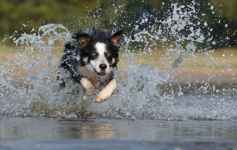 走っている犬と水しぶき