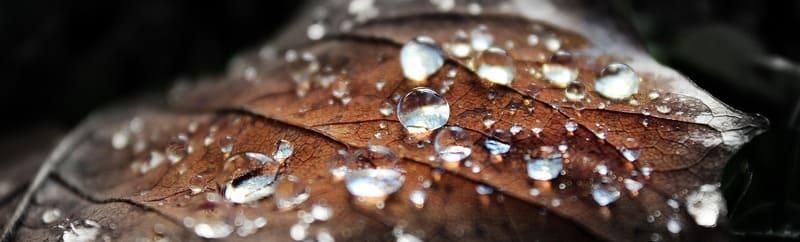 落ち葉について水滴