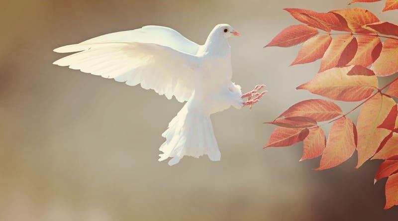 飛んでいる白いハトの写真