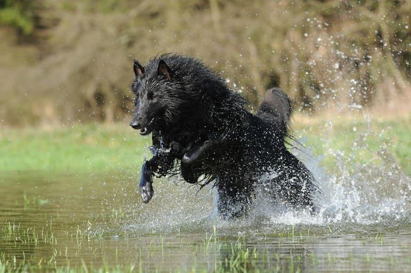 水しぶきと犬の写真