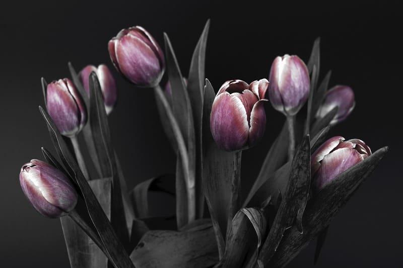 紫のチューリップセレクトカラー