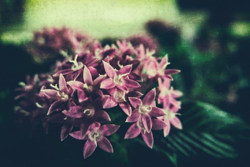 フィルムカメラで撮影した花の写真
