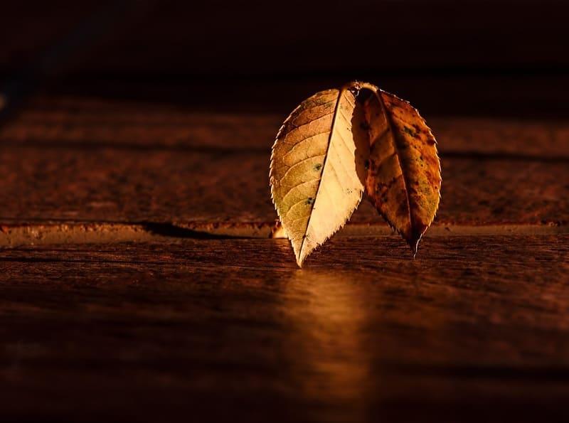 テーブルに置かれた落ち葉