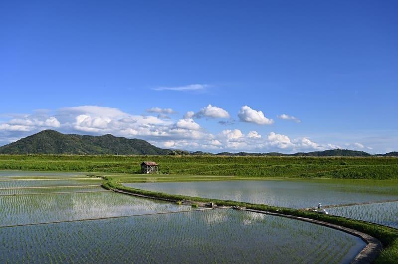 田植え後水が張られた田んぼ