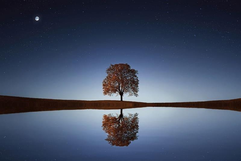 夜に撮影した星と月と木のリフレクション