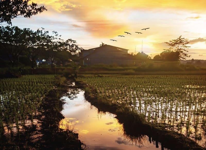田んぼと夕日のリフレクション