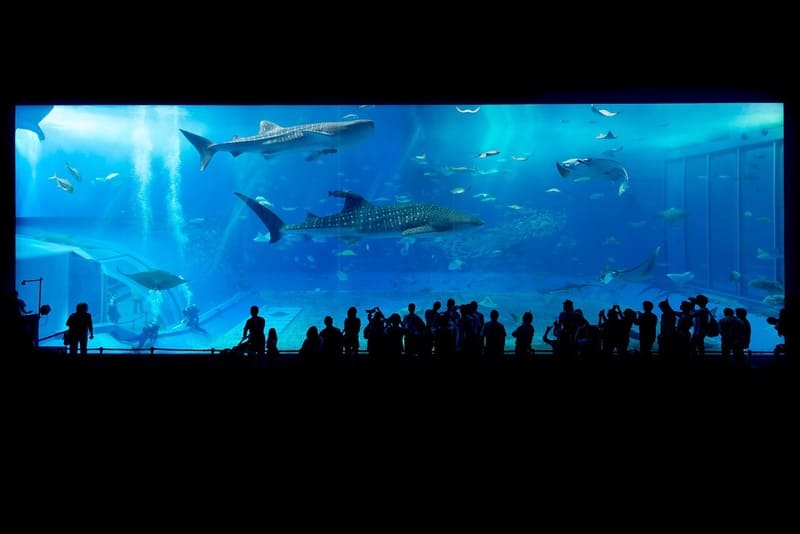巨大な水族館