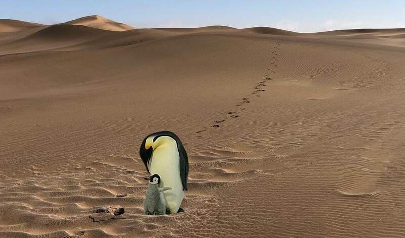 砂漠のペンギン