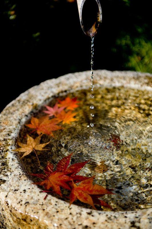 水に浮かぶ紅葉の葉