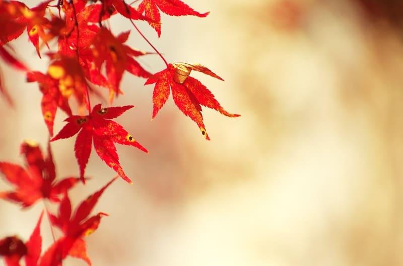 望遠レンズで撮影した紅葉