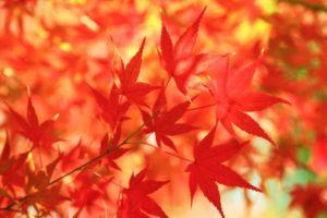 紅葉を素敵な写真に仕上げるための3つのポイント!よくある失敗の原因と対策方法とは?