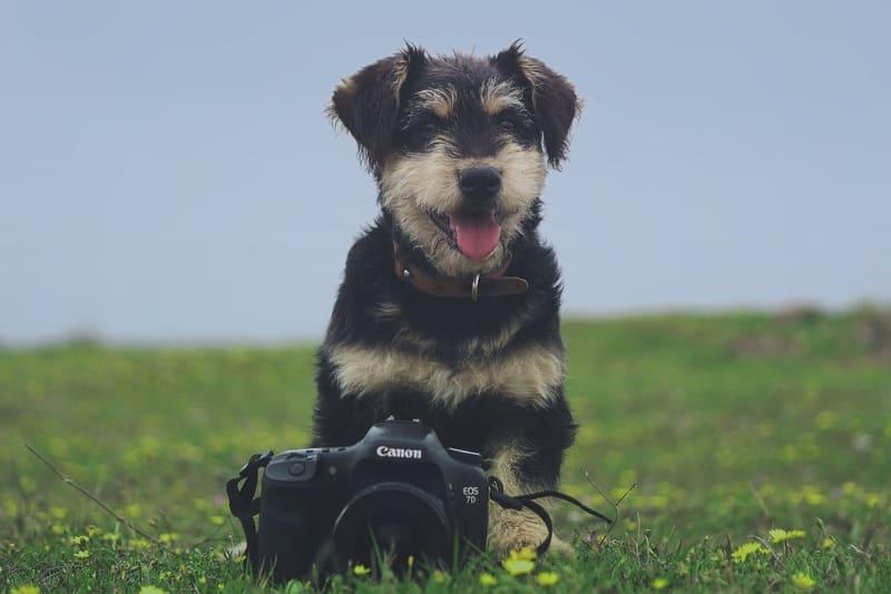 芝生の犬と一眼レフ